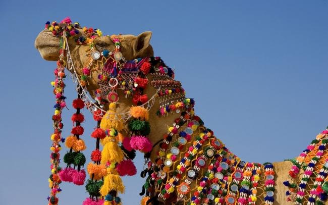 VIAJES A LA INDIA Y MALDIVAS DESDE BUENOS AIRES - Agra / Delhi / Jaipur / Maldivas /  - Buteler en India